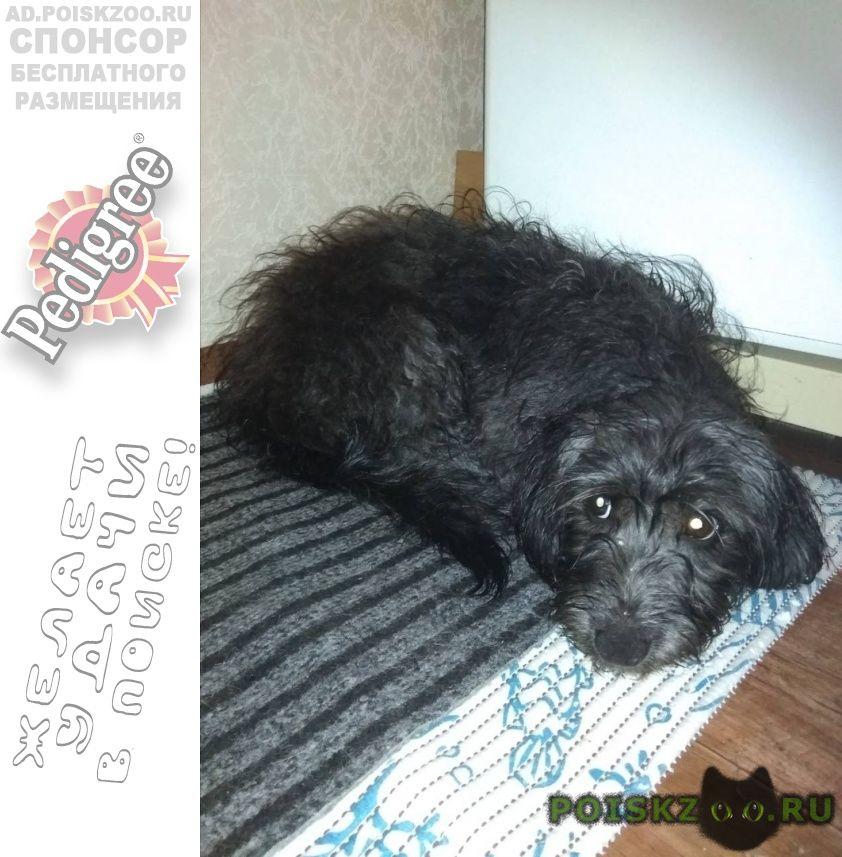 Найдена собака кобель г.Красноярск