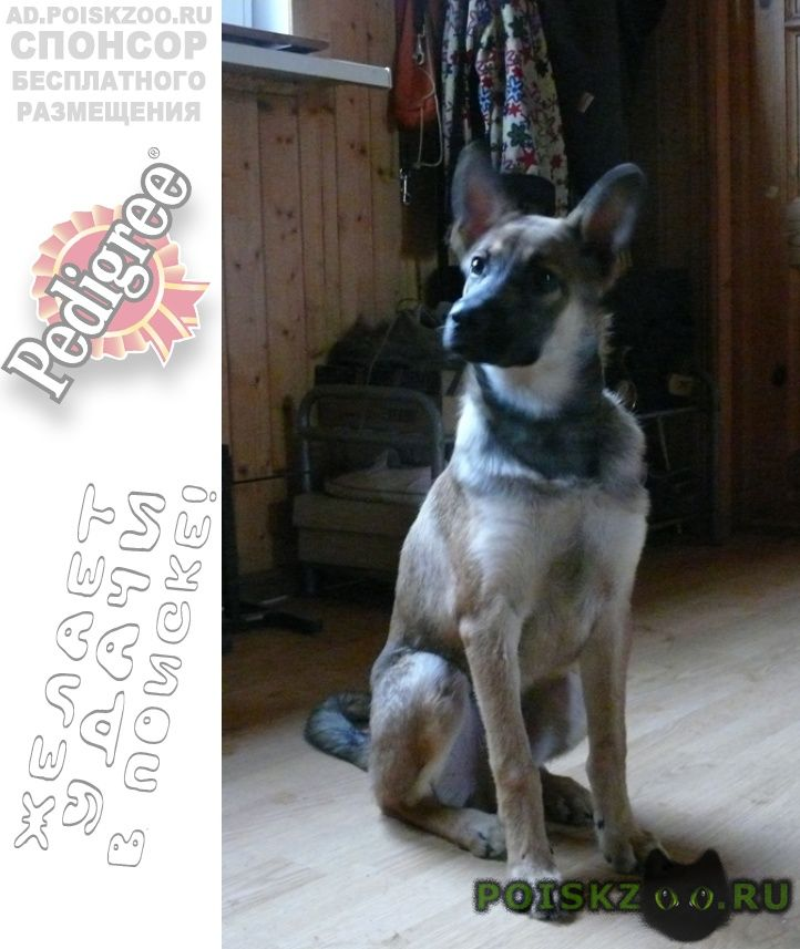 Найдена собака кобель щенок г.Москва