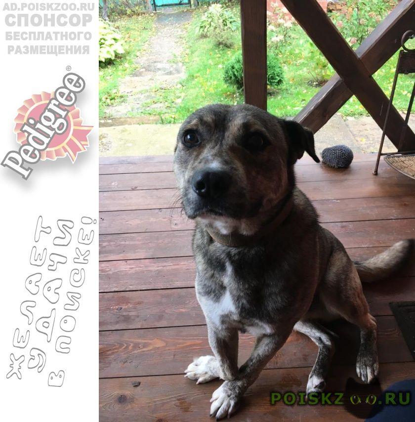 Найдена собака кобель мальчик, правая лапка с дефектом г.Волоколамск