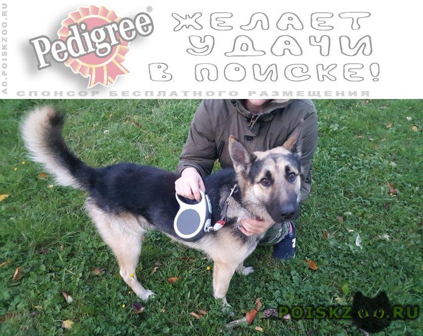 Найдена собака кобель ищу хозяина г.Луга