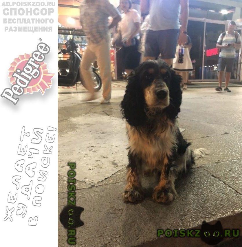 Найдена собака кобель г.Ялта