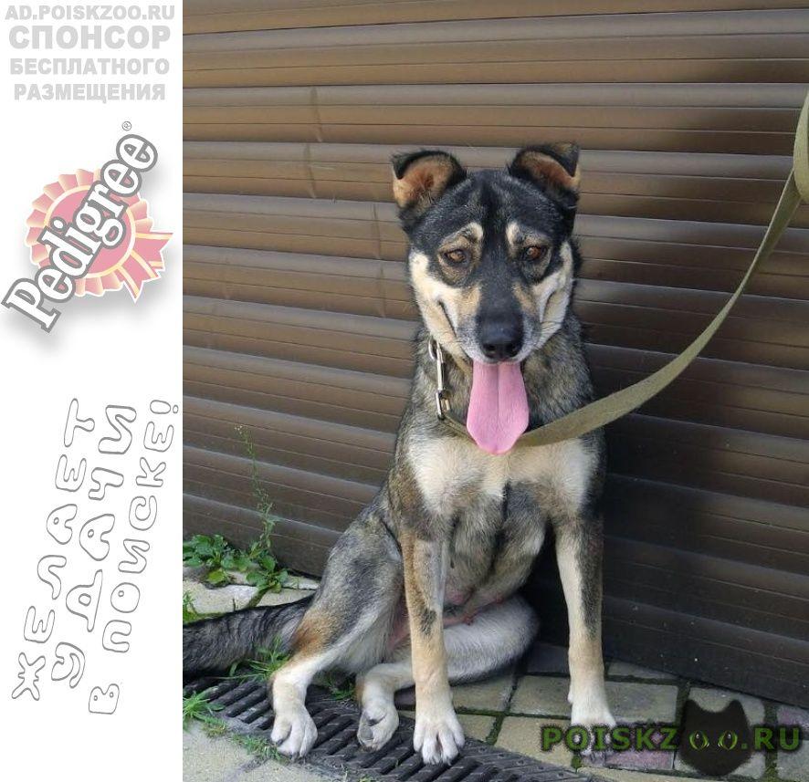 Найдена собака пожалуйста помогите фросе г.Краснодар