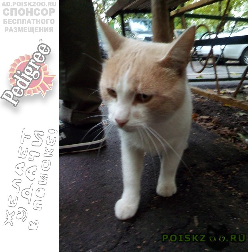 Найдена кошка кот г.Москва