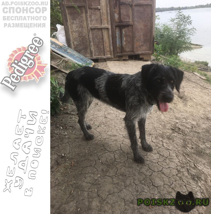 Найдена собака г.Новочеркасск