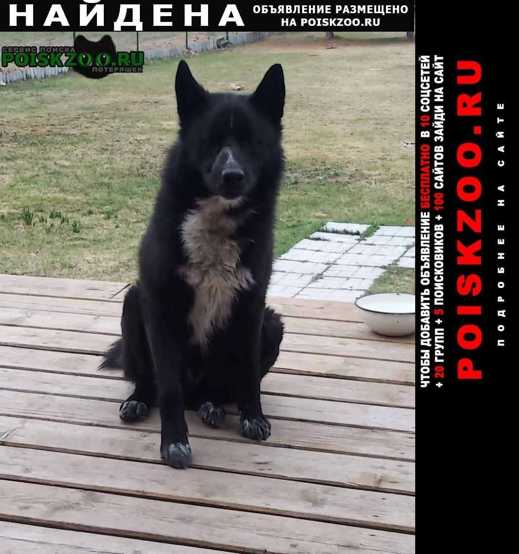 Найдена собака кобель Куровское