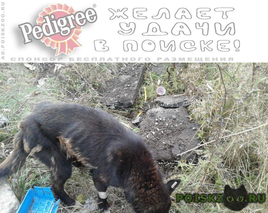 Найдена собака ул. новосмирновская г.Ижевск