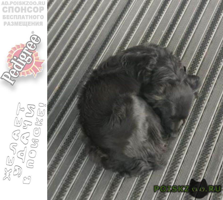 Найдена собака ак.варги, 8к1 г.Москва