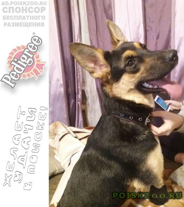 Найдена собака г.Новосибирск