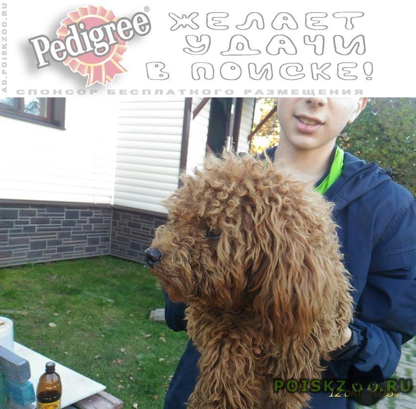 Найдена собака кобель г.Домодедово