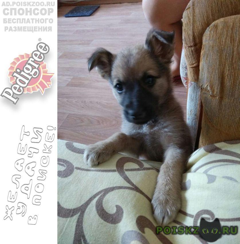 Найдена собака отдам щенка г.Новосибирск