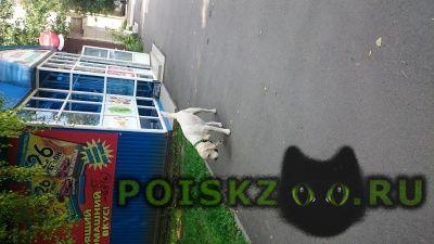 Найдена собака кобель г.Ставрополь