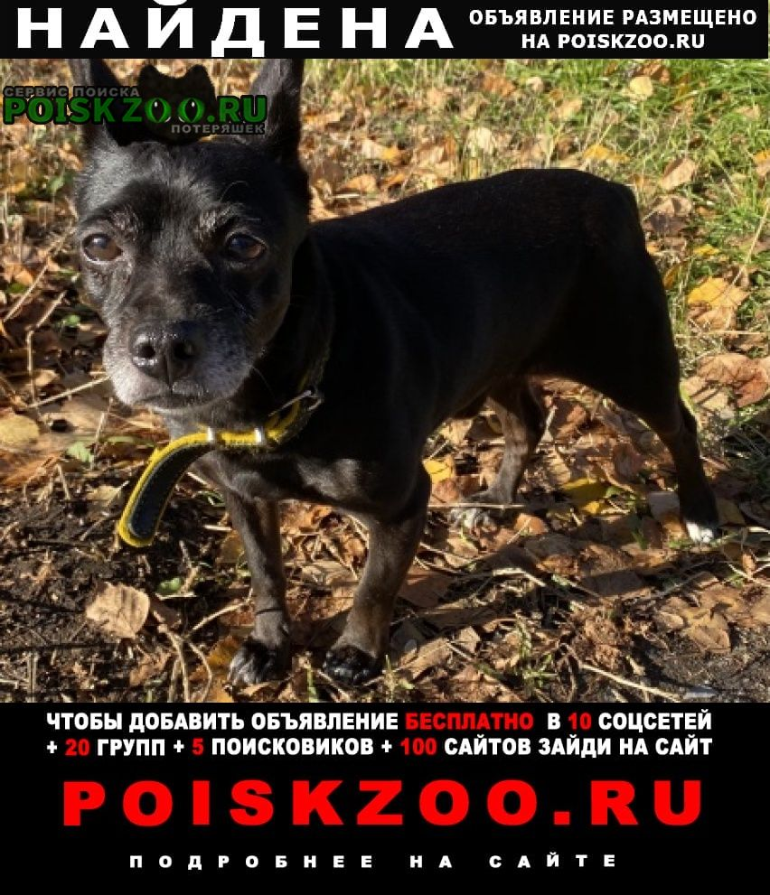 Сургут Найдена собака