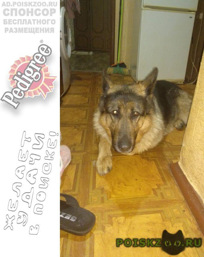 Найдена собака в гор железнодорожном мо г.Балашиха