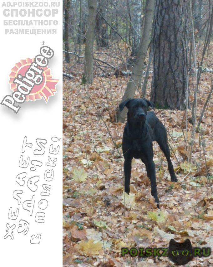 Найдена собака кобель чистый, ухоженный, без ошейника г.Люберцы