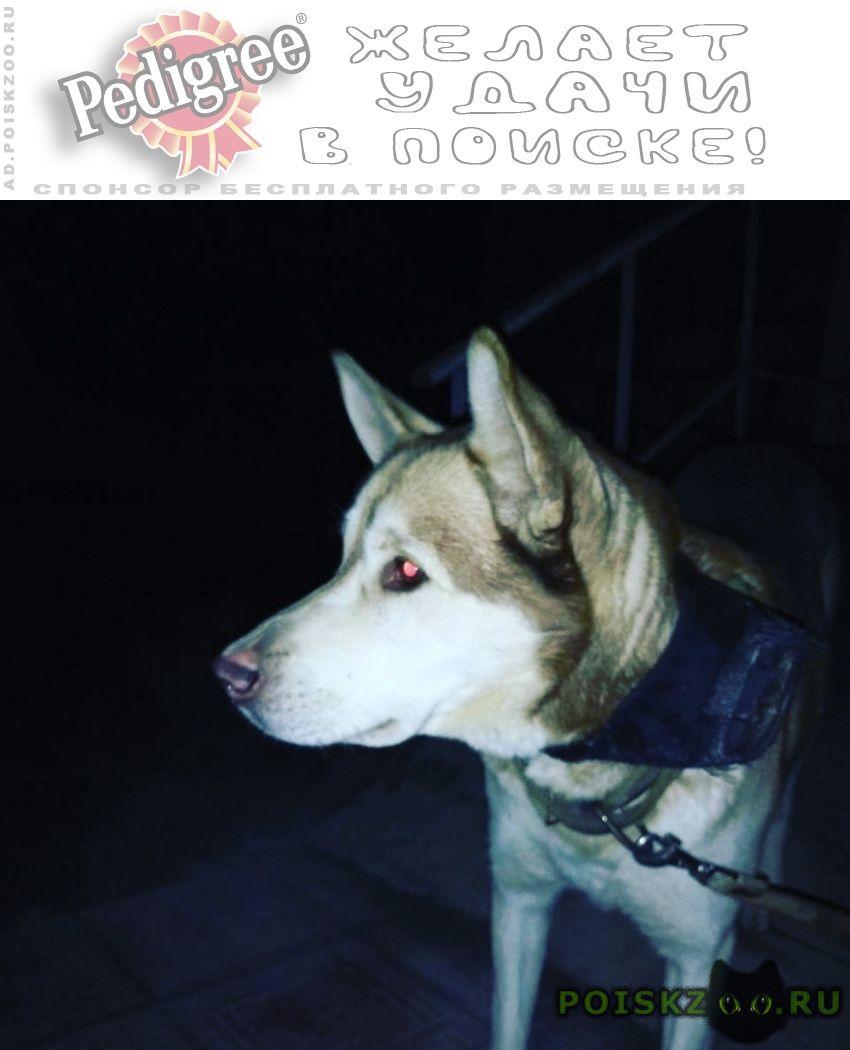 Найдена собака кобель г.Калуга