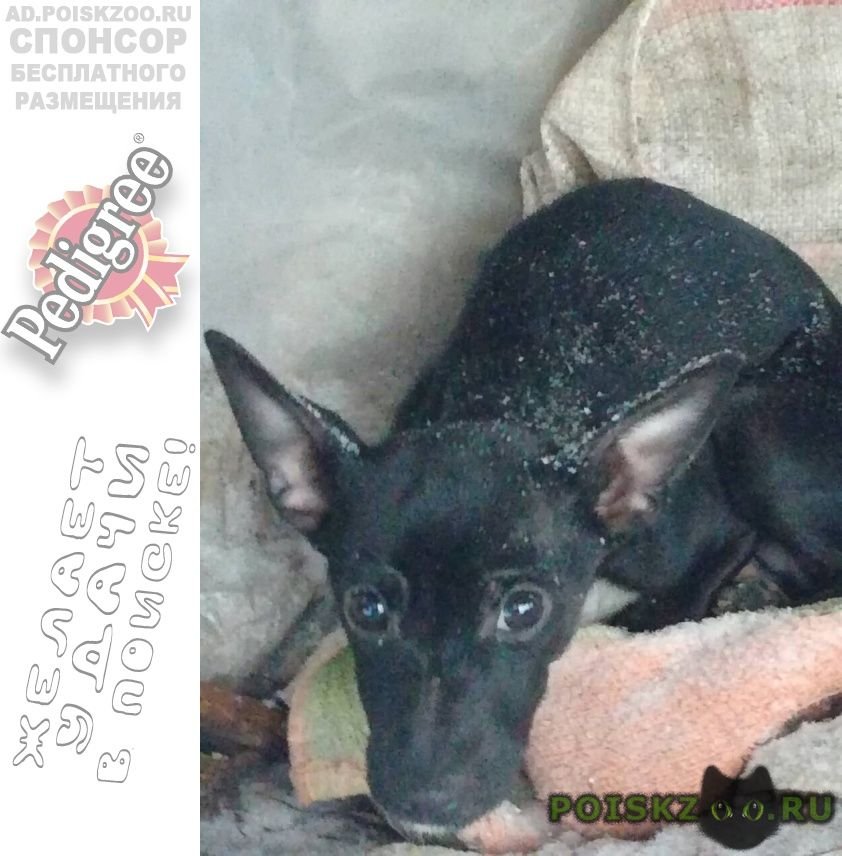 Найдена собака породы незнаю домашняя в хорошие руки г.Ханты-Мансийск