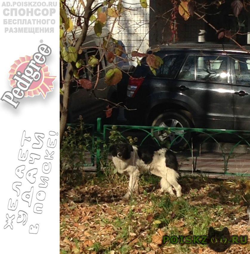 Найдена собака таганский район.прибилась собаня г.Москва