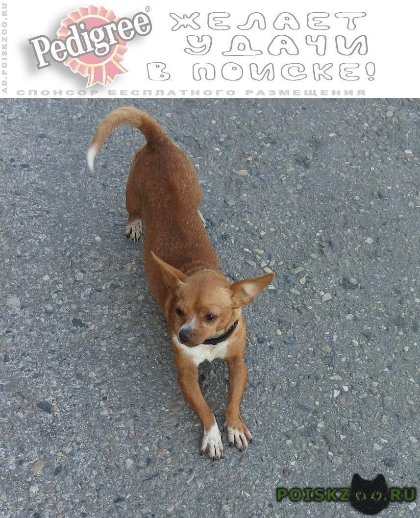 Найдена собака нет нижнего левого клыка г.Туапсе