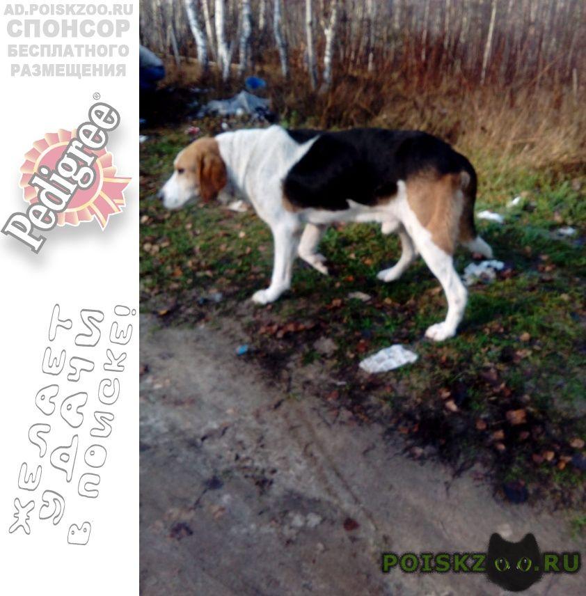 Найдена собака кобель в урицком районе орловской области г.Орел