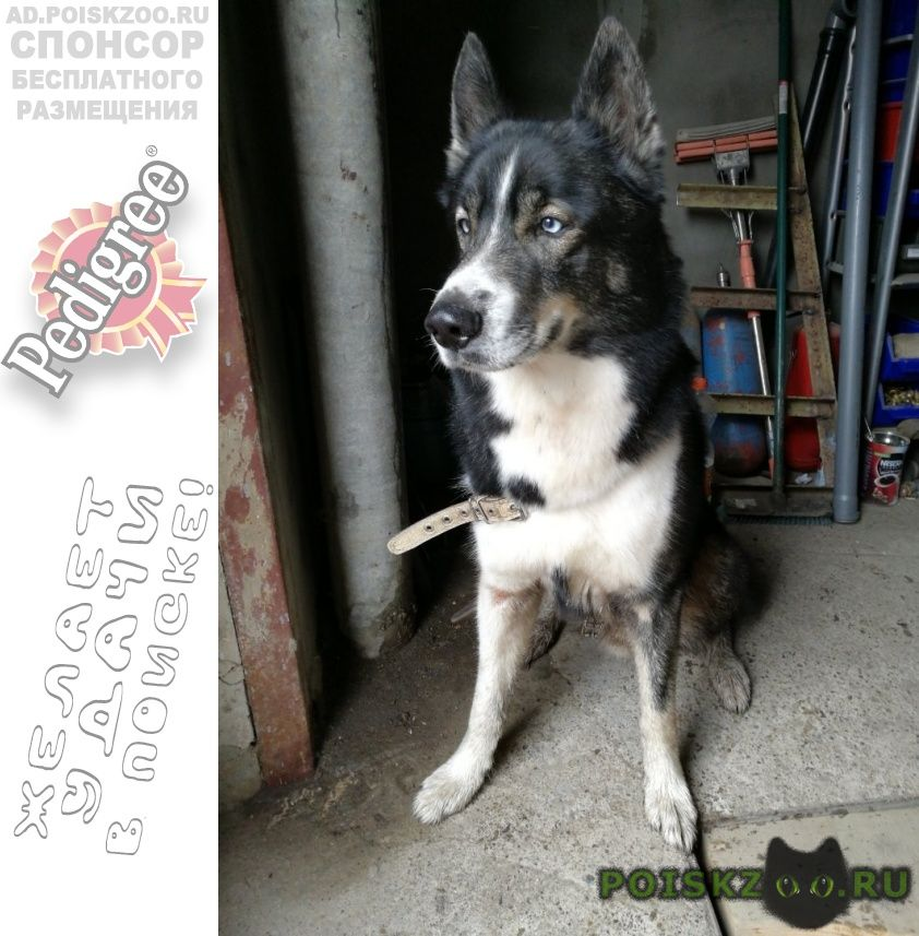 Найдена собака кобель г.Набережные Челны