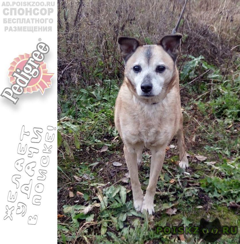 Найдена собака с ошейником и поводком г.Москва