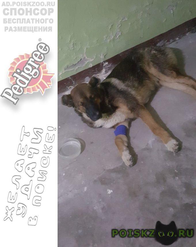 Найдена собака дворняга г.Санкт-Петербург