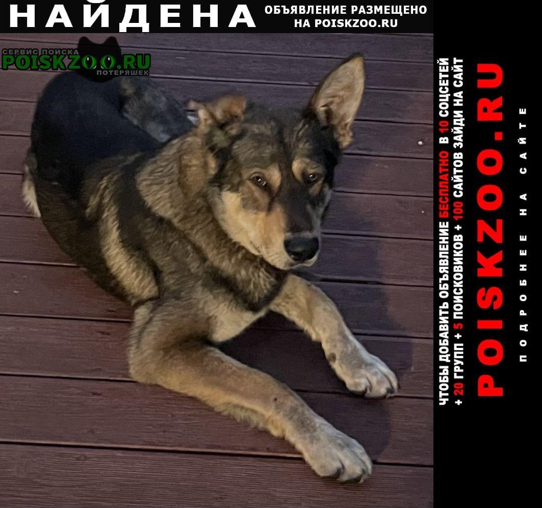 Найдена собака овчарка Красногорск