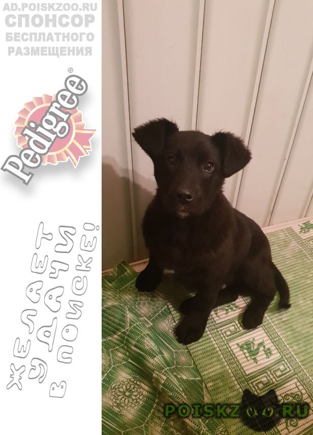 Найдена собака кобель щенок в николо-урюпино г.Красногорск