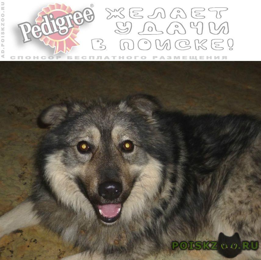 Найдена собака кобель серый пушистый г.Екатеринбург