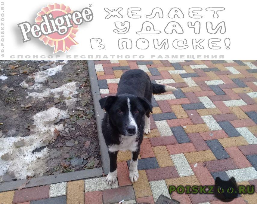 Найдена собака живет на остановке г.Ставрополь