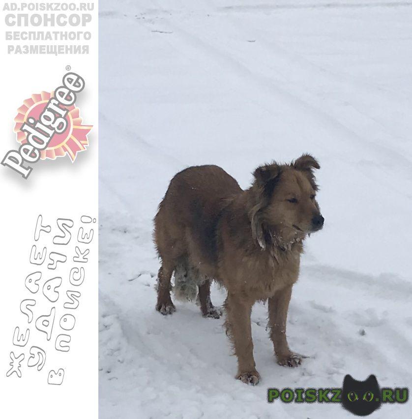 Найдена собака г.Москва