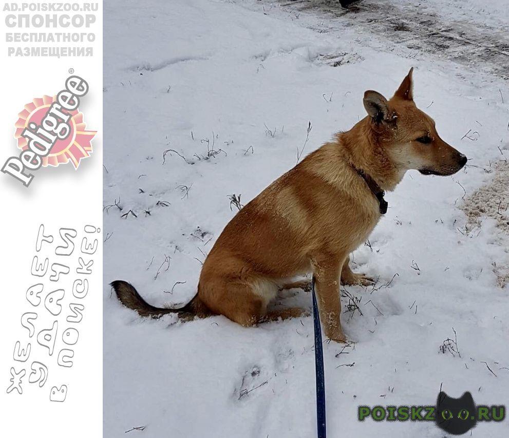 Найдена собака рыжего окраса на тухачевского г.Москва