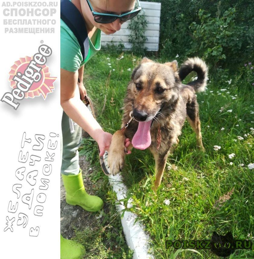 Найдена собака кобель попал в отлов. г.Ногинск