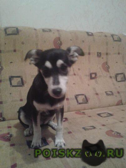 Найдена собака г.Севастополь