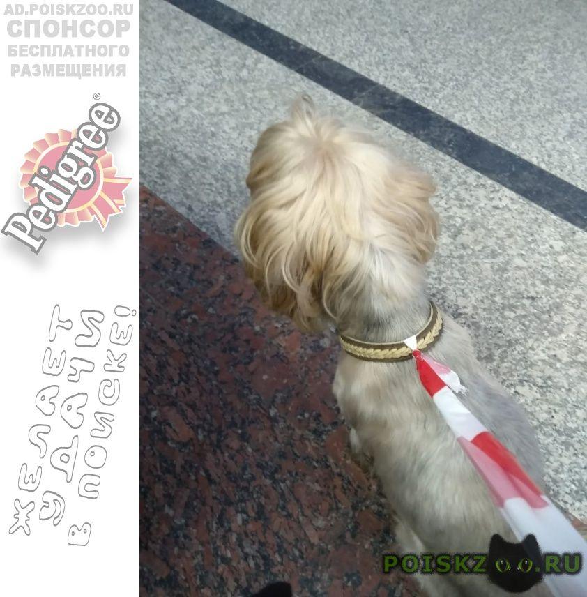 Найдена собака кобель срочно. йорик. г.Москва