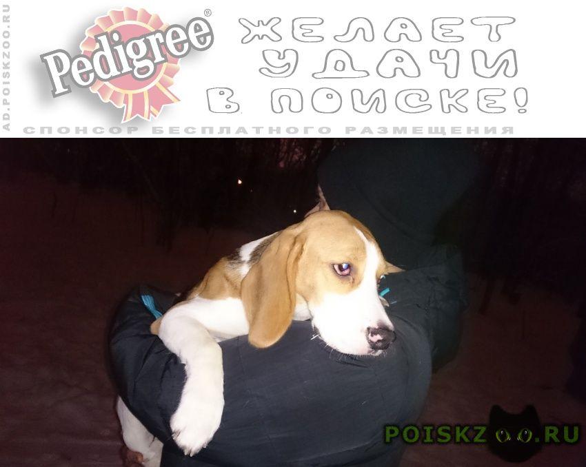 Найдена собака кобель ясенево 01.01 г.Москва