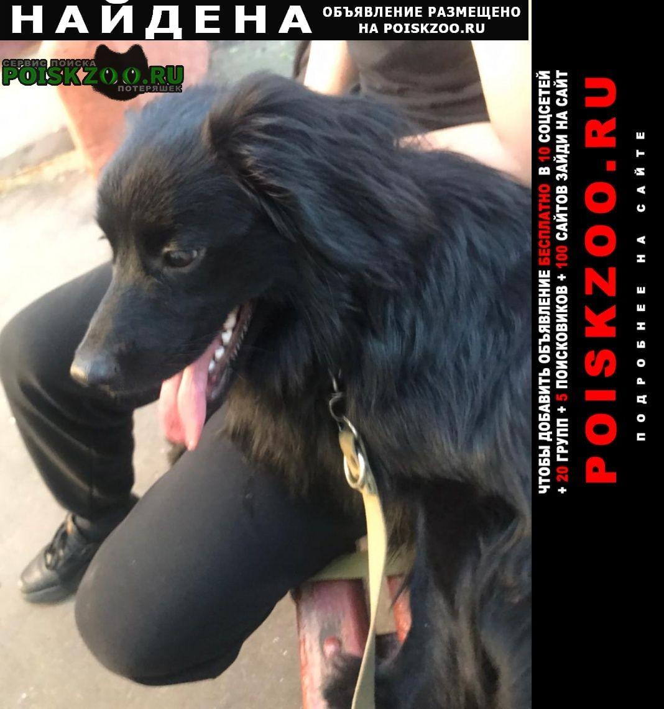 Найдена собака кобель перово чёрная собака Москва
