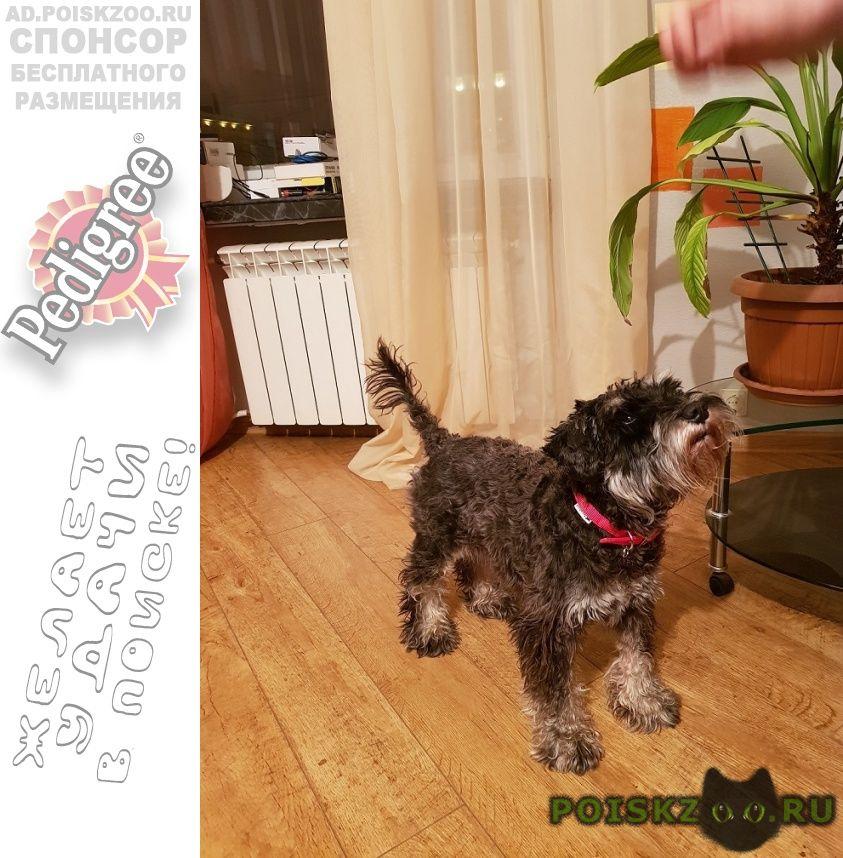 Найдена собака кобель спокойный, смелый 3-4 года г.Москва