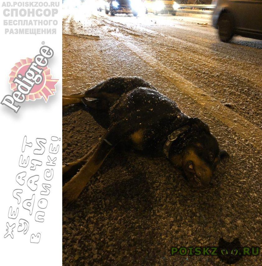 Найдена собака кобель срочно нужна помощь г.Москва