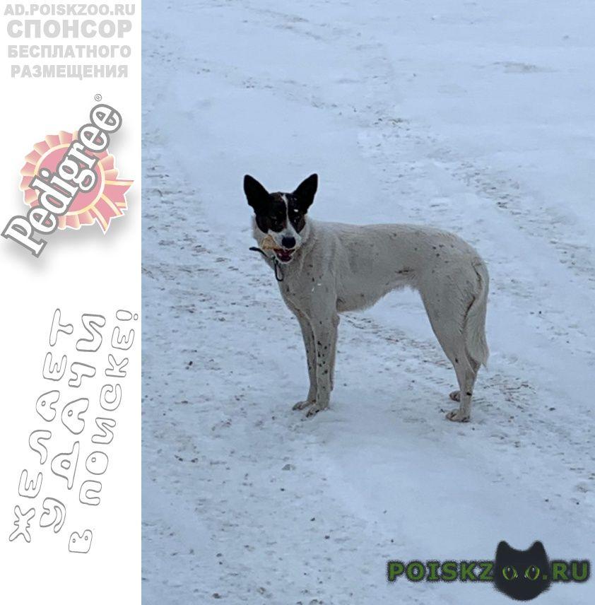 Найдена собака г.Внуково