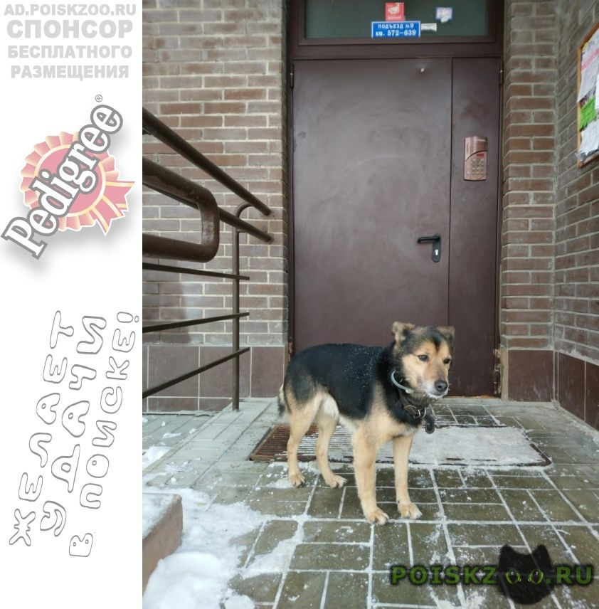 Найдена собака кобель г.Видное