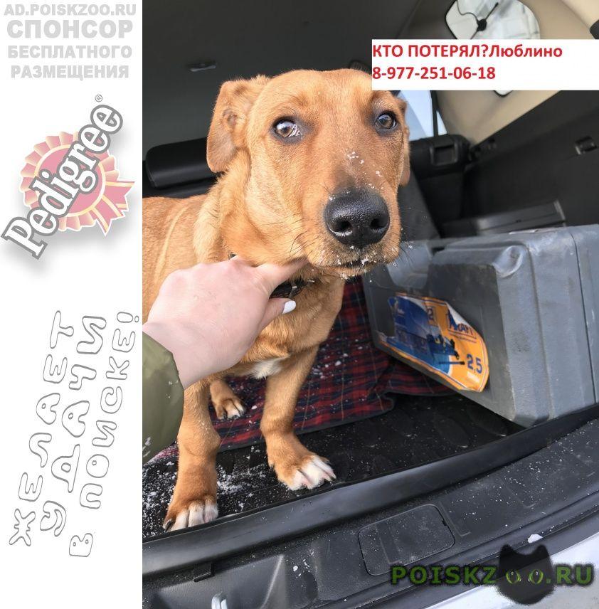 Найдена собака кобель метис таксы в люблино г.Москва