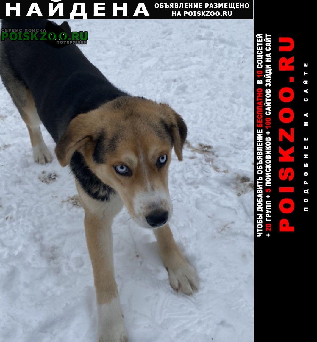 Найдена собака Солнечногорск