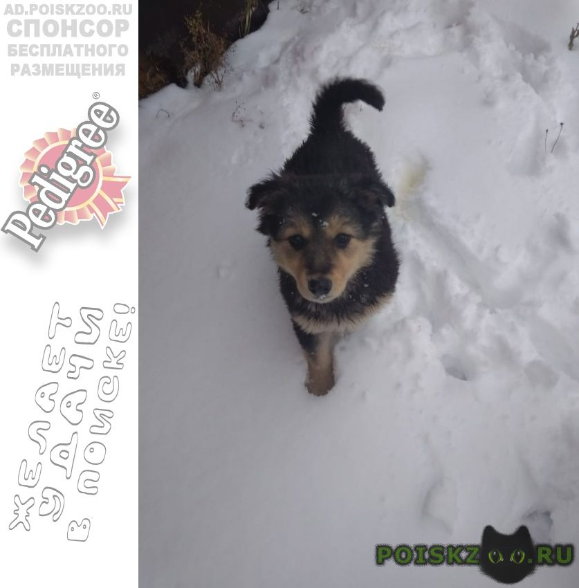 Найдена собака щенок девочка г.Апрелевка