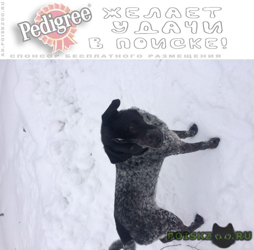 Найдена собака кобель г.Петушки