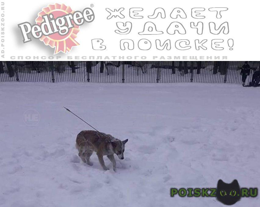 Найдена собака, со стрелой в спине  г.Москва