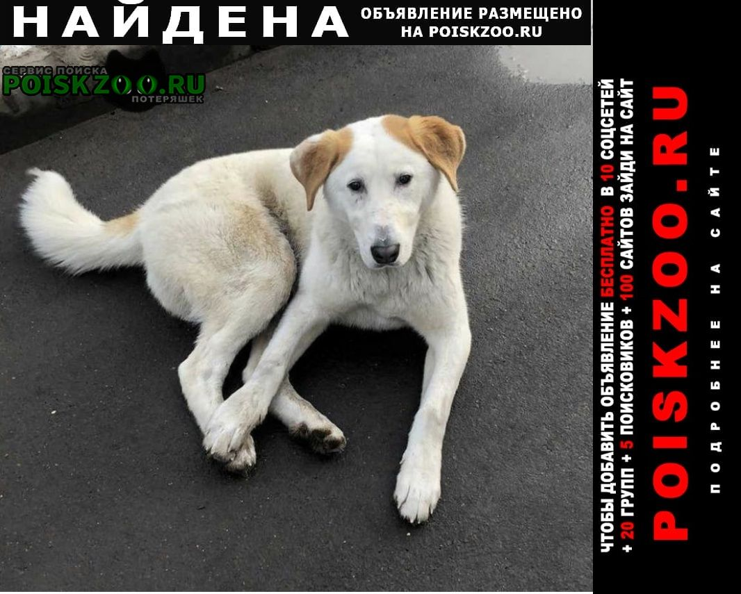 Найдена собака лефортово Москва