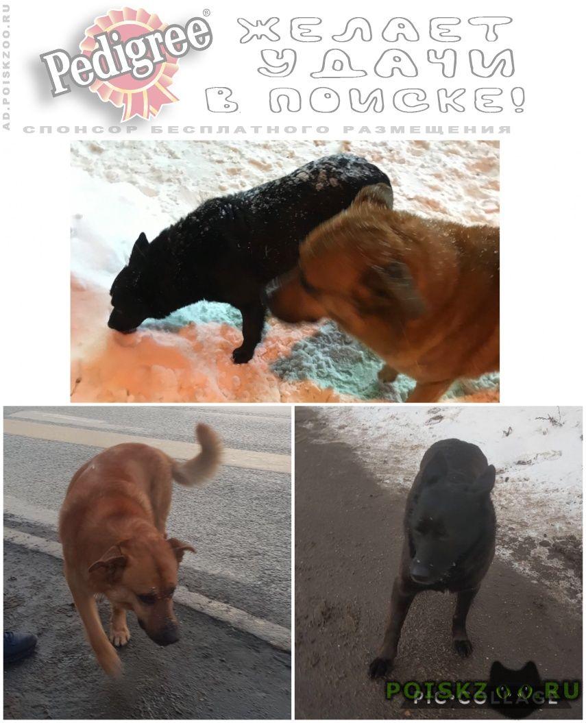 Найдена собака ы две собаки, бегают вместе г.Москва