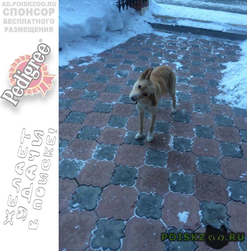 Найдена собака г.Тюмень