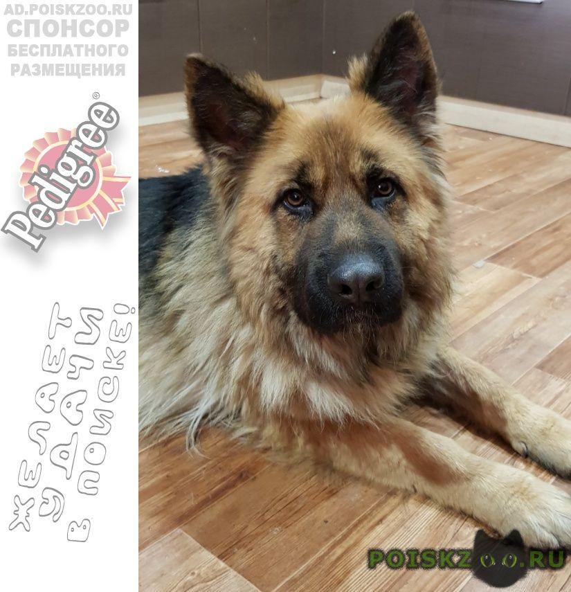 Найдена собака ищем старого или нового хозяина г.Белгород